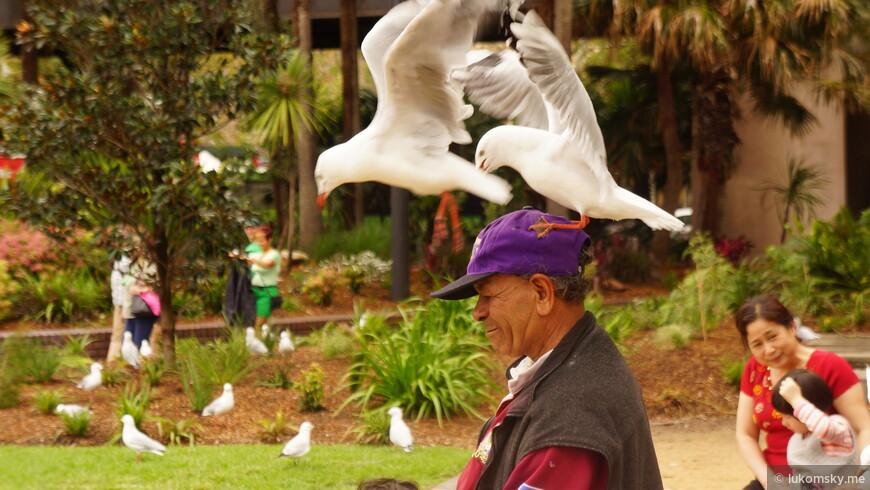 Дяденька кормит птичек на радость им и туристам
