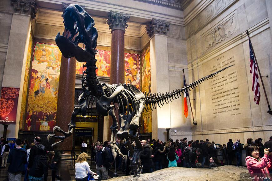 Американский музей естественной истории (American Museum of Natural History)