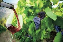 В Волгодонске пройдёт первый фестиваль вина