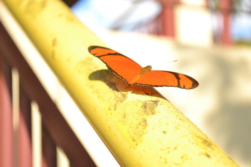 Вот такие прекрасные бабочки на водопадах!