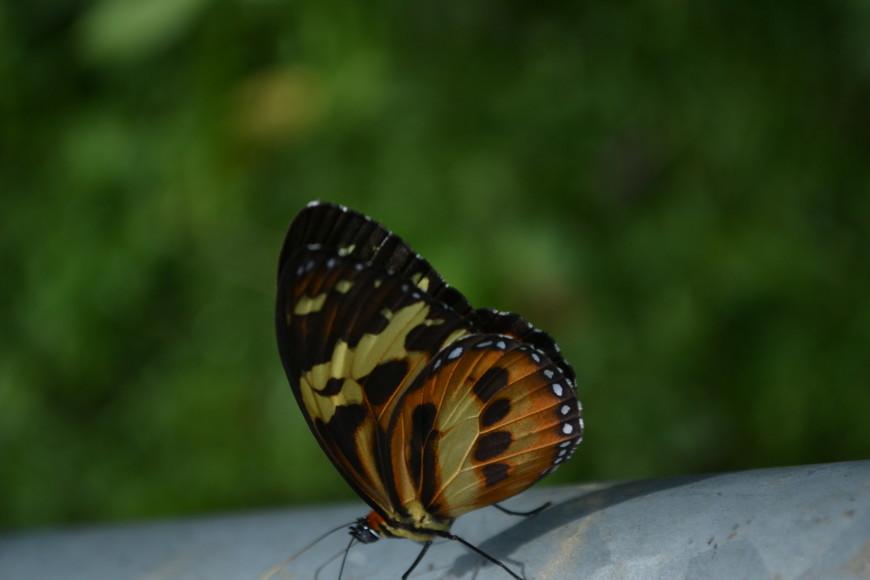 И снова бабочки!