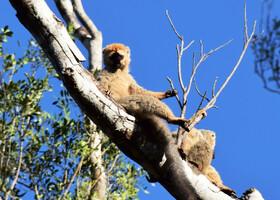 Жизнь прекрасна! И где, как не на Мадагаскаре
