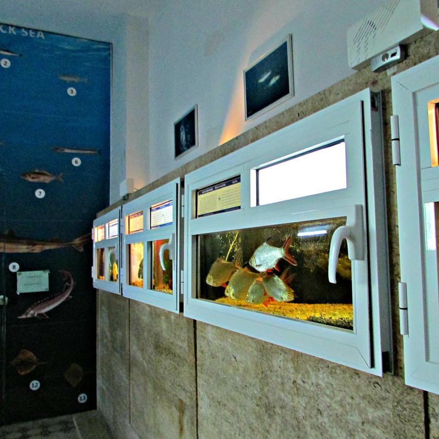 """Одна из достопримечательностей города -  музей """"Аквариум"""" (открылся в 1912 г.). Можно рассмотреть живые образцы черноморской фауны."""