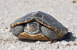 Черепахи атаковали аэропорт Нью-Йорка