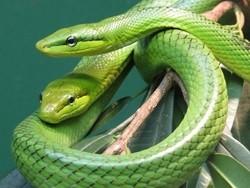 Пассажир пытался провезти в самолёте 10 змей в штанах