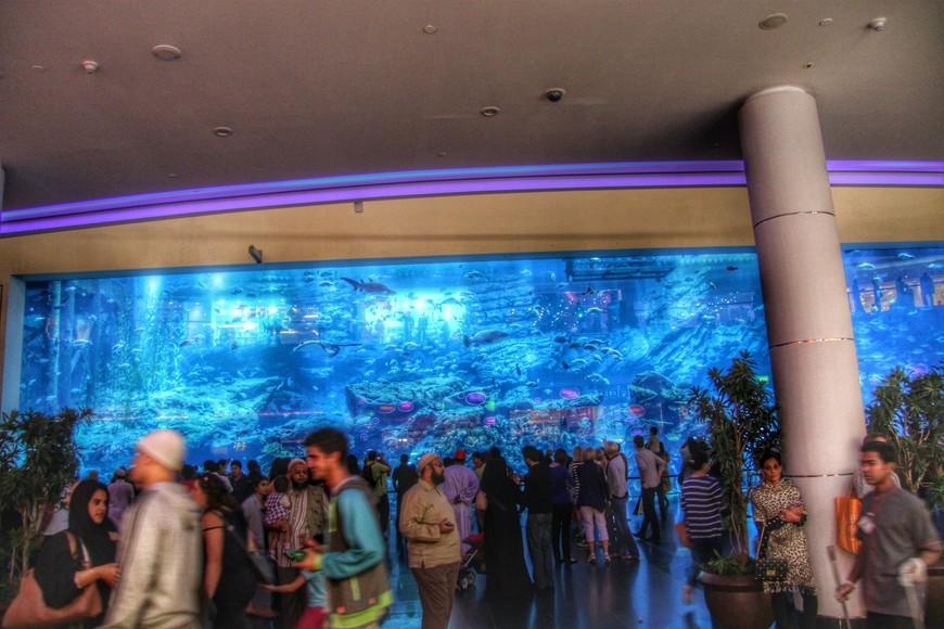 Океанариум в  Дубай Молл. Самый большой в мире крытый океанариум, внесён в книгу рекордов Гиннеса, в котором можно увидеть более 33 000 рыб и морских животных.