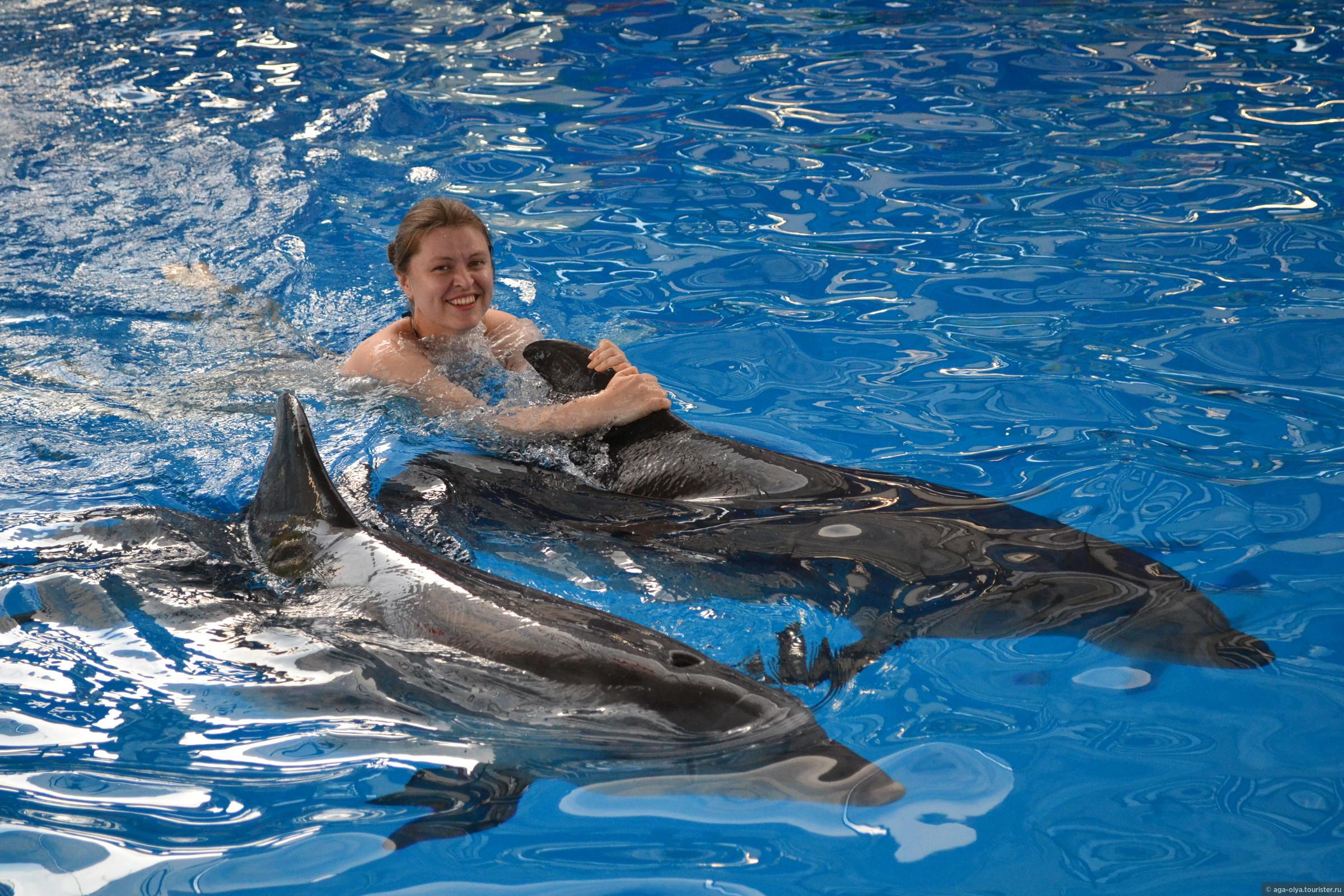 дельфин фото адлер