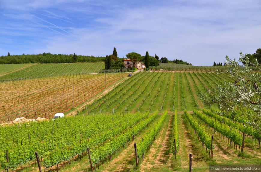 Тоскана с её кипарисовыми и оливковыми рощами на живописных холмах, овеваемых морскими ветрами, подарила миру много выдающихся красных вин. Марку «Кьянти», имеющую категорию DOCG (Название, Контролируемое по Происхождению), считают самым известным итальянским брендом.