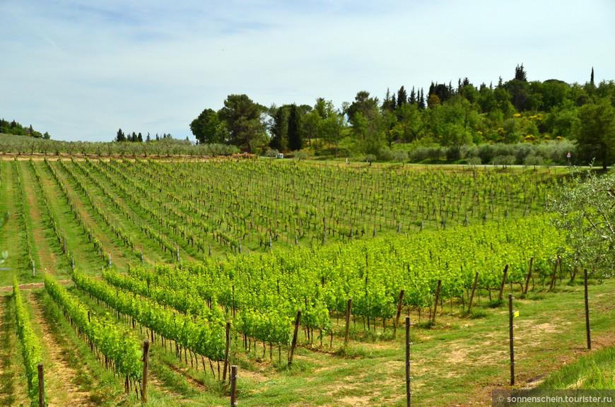 Упоминание о Кьянти датируется 1398 годом. В 1716 году Кьянти выпускали 4 деревни: Рада, Гайоле, Кастеллина и Греве. Сегодня зона Кьянти расширилась и объединила 8 зон, оставив нетронутым «сердце» производства, где находятся старинные виноградники, считающиеся элитными.