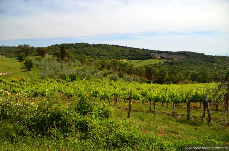 Кьянти Классико (Chianti Classico) — наиболее ценное вино из линейки Кьянти. Оно производится на небольшой территории между Флоренцией и Сиеной. В эту зону классического Кьянти включено 70 тысяч гектаров земли на территориях десятка коммун.