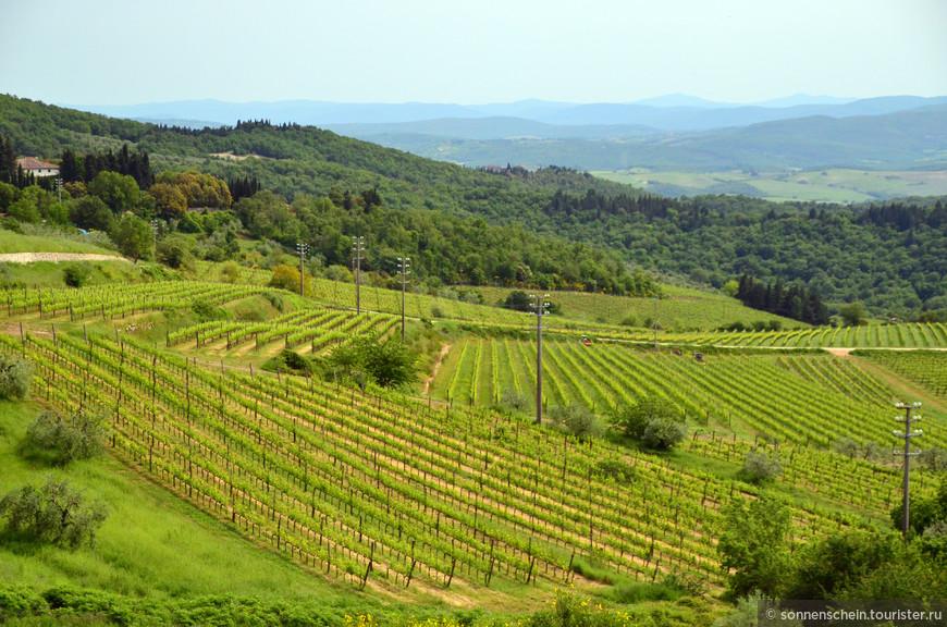 """Более 600 членов Ассоциации Кьянти Классико (её также называют """"Gallo Nero"""", чёрный петух, по символу Кьянти) производят более 70% вина с квалификационными признаками Кьянти Классико. Помимо производства и контроля качества, одной из важных функций Ассоциации Кьянти Классико является маркетинговая поддержка производителей Кьянти во всём мире. Рестораны, винные бутики, супермаркеты выставляют это вино на самые почётные места. Кьянти Классико признан отдельным и независимым вином, отличающимся от всех остальных Кьянти. Его уникальность — в терруаре, качестве, истории."""