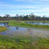 Болота - неотъемлемая часть парка  Лахемаа