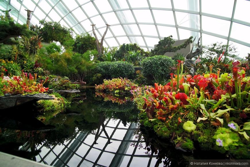 Моя любимая, и, пожалуй, самая красивая локация Облачного леса - Lost World.