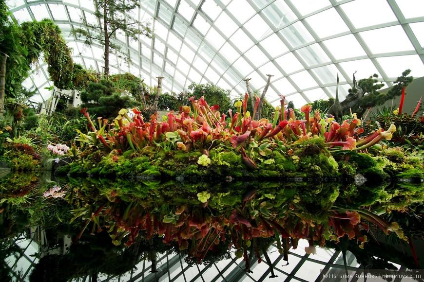 Lost World (Затерянный мир) - самая высокая точка искуственной горы, где представлена растительность, обычно произрастающая на высоте около 2 км над уровнем моря. В первую очередь, это мох, папоротник и плотоядные растения.