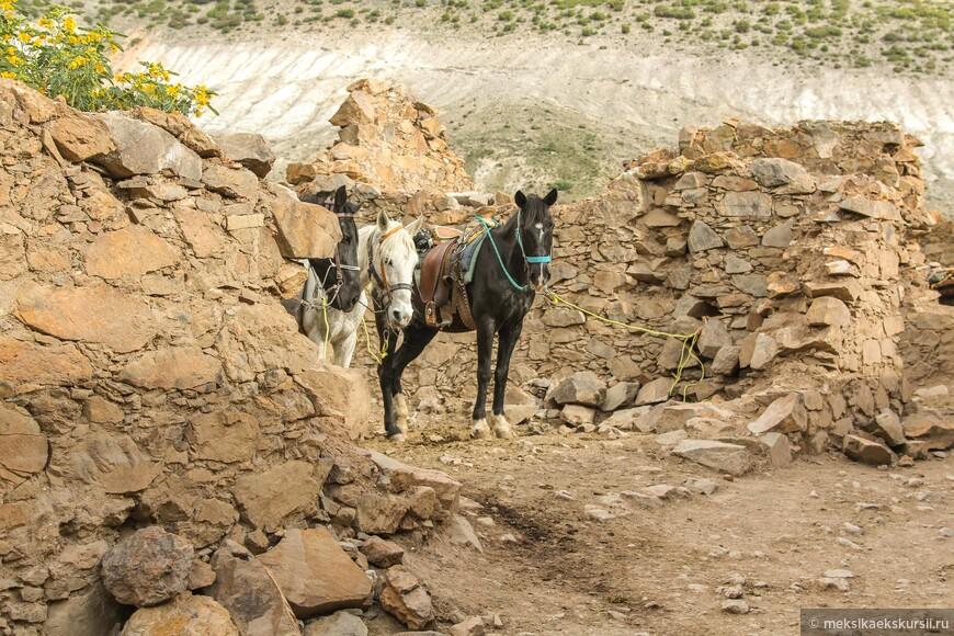 Разрушенные дома используют как паркинг для лошадей.