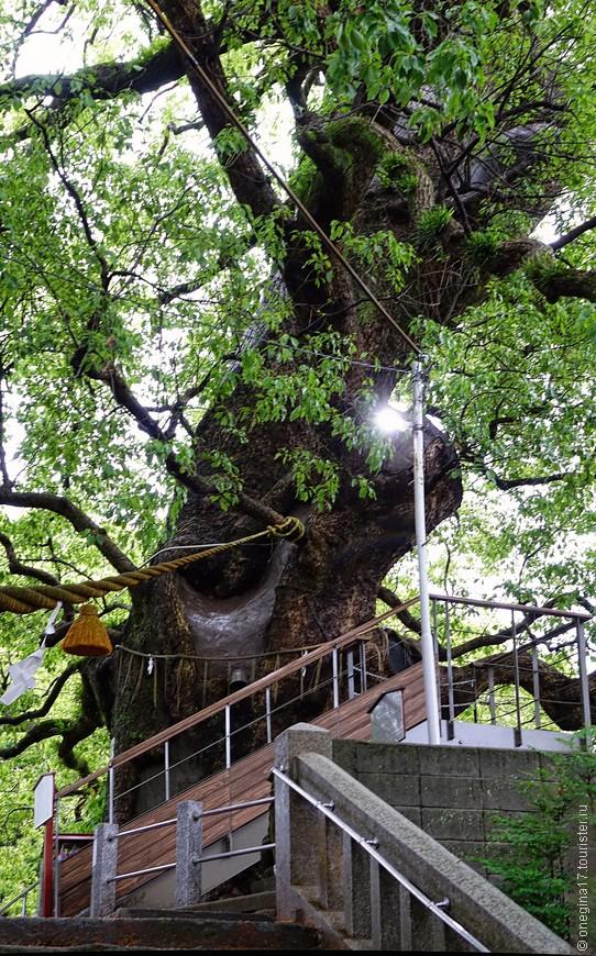 Еще один след ядерной бомбардировки. Осколок так и остался в стволе дерева...