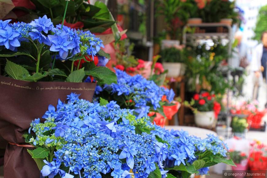 Нагасаки - это гортензии. Много-много гортензий, выбранных бог весть когда одним из символов города. В сезон их цветения город становится голубым от обилия кустов...