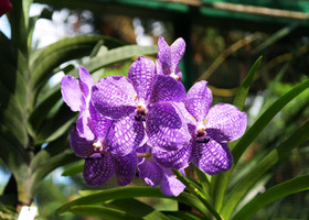 Национальный парк орхидей в Сингапуре