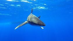 Акула напала на туриста на пляже в Испании
