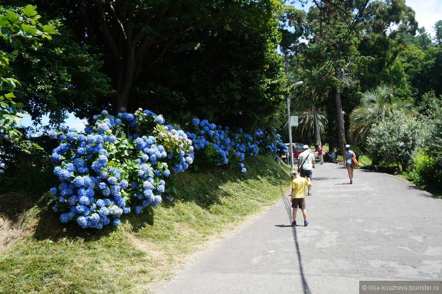как доехать до ботанического сада в батуми самыми
