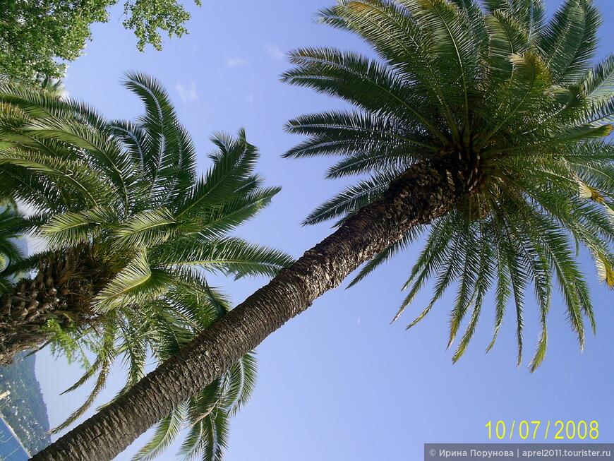 Пальмы на набережной Старой Гагры.