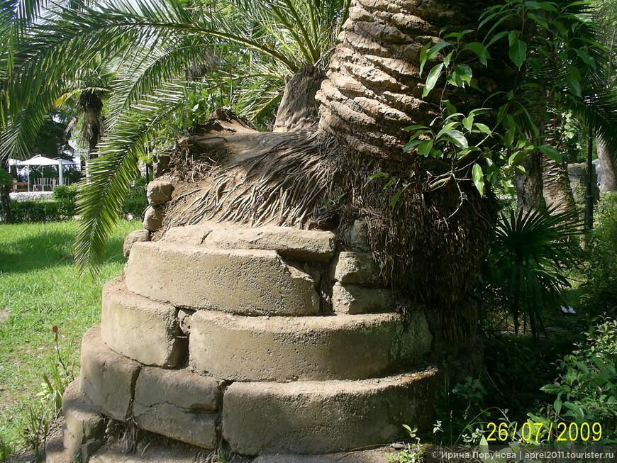 """""""И на камнях растут пальмы""""..."""