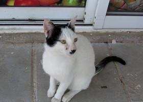 И еще очаровательные кипрские кошки! Длинные, красивоглазые и мяучие! Милые, милые кипрские зверьки, вы были моими транквилизаторами-успокоителями в этой неоднозначной поездке ))