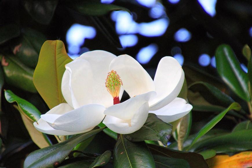 Природу здесь берегут и холят. Парки потрясающей красоты, а цветы, как на подбор - и формой, и расцветкой, и размерами.