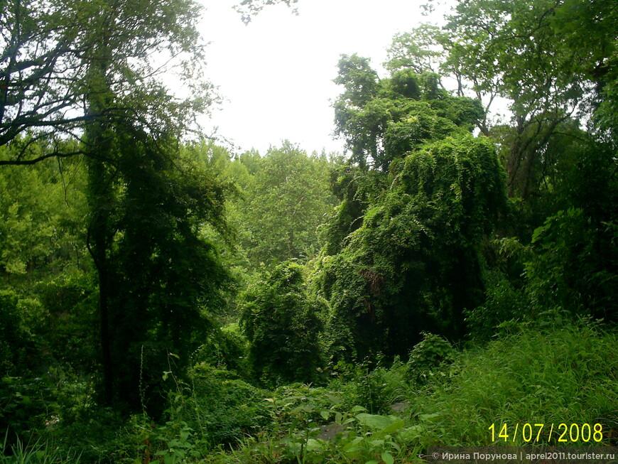 Абхазские джунгли.