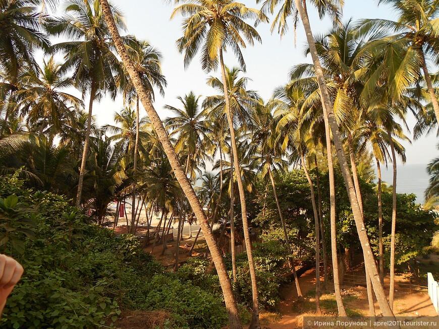 Пальмовая роща по дороге на пляж Вагатор.