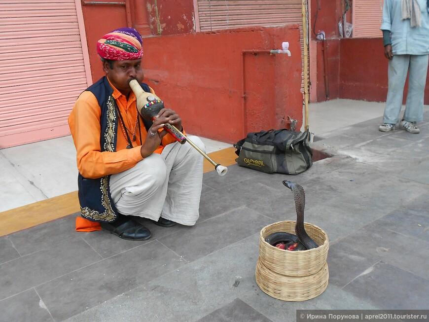 Заклинатель змей в Джайпуре.