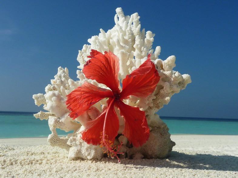 открытка с днем рождения море пляж цветы пива