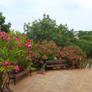 Цветущая лестница, ведущая к карелле св. Николая.
