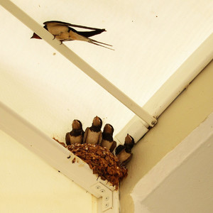 И ласточкино гнездо у нас было.