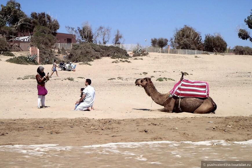 Фотосессия с верблюдом.