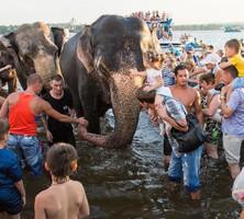 Индийских слонов искупали на пляже Нижнего Тагила