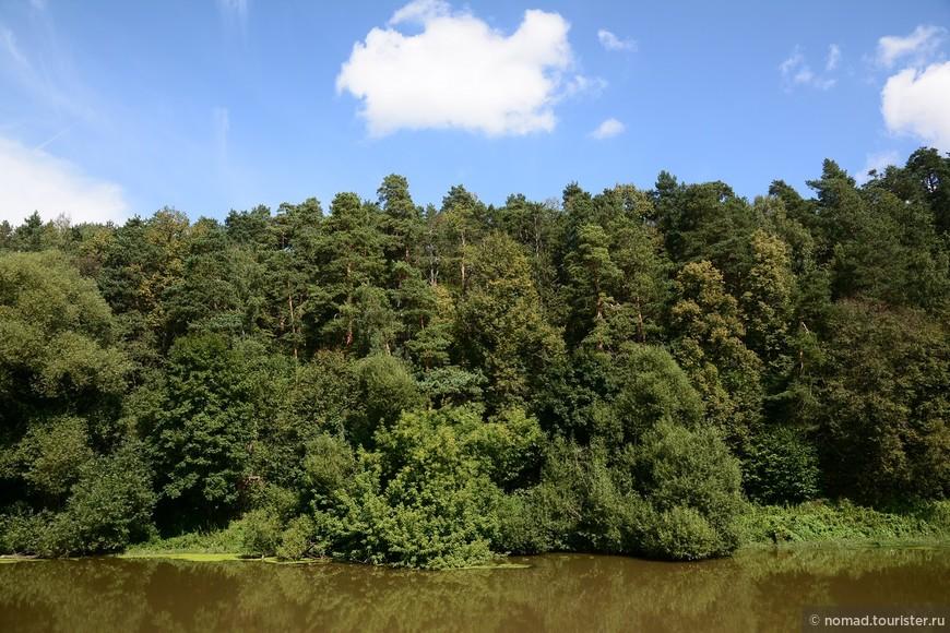 Густой лес на том берегу Десны...