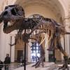 Тиранозавр Сью