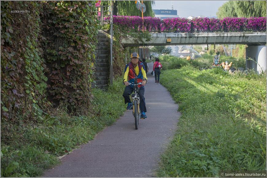 Езда на велосипеде вдоль ручьев, я так понял, это для корейца - святое. Мы сами покатались так в нескольких городах. Все ручьи обсажены растительностью и сюда почти не доходят выхлопные газы с улицы, расположенной выше. И не надо мудрить со специальными велодорожками.