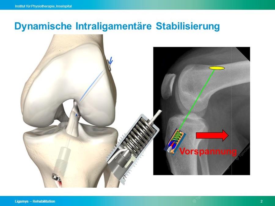 анатомия в картинках суставы