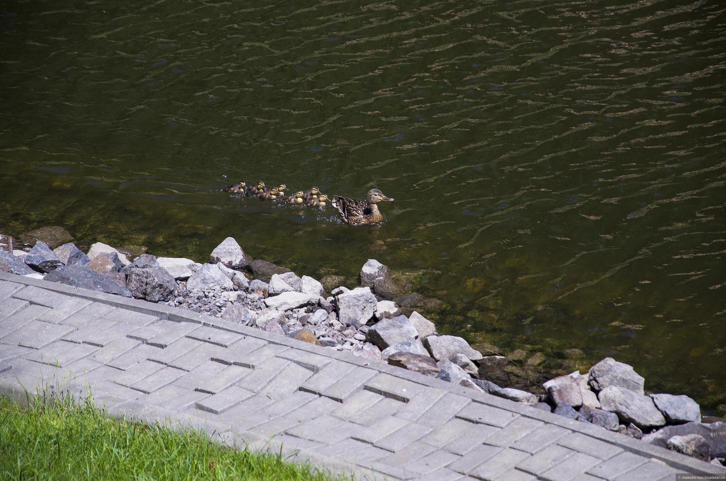 Хотя, помимо лебедей, здесь водятся и другие пернатые., Гомельский дворцово-парковый ансамбль.