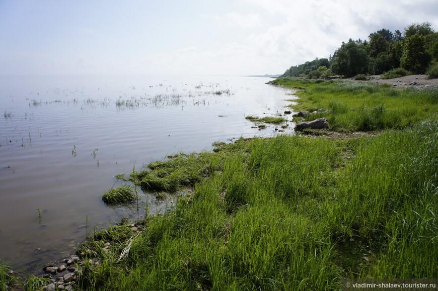 Берега озера преимущественно низменные и болотистые. По прогнозам учёных (и вовсе не британских) через несколько сотен лет при таких темпах заиливания озеро должно будет превратится в камышовое болото.