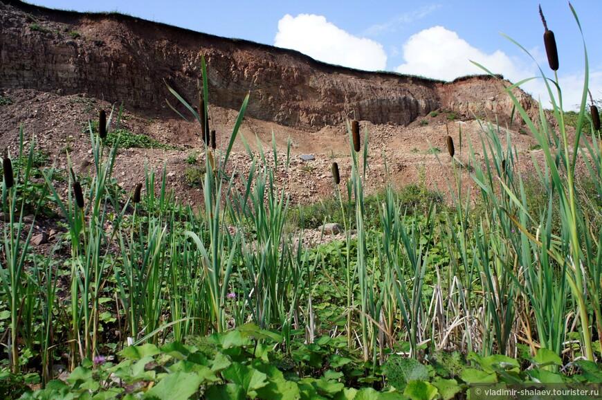 На этом участке берег озера Ильмень представляет собой высокий обнажённый глинистый обрыв, обращённый срезом на северо-восток.