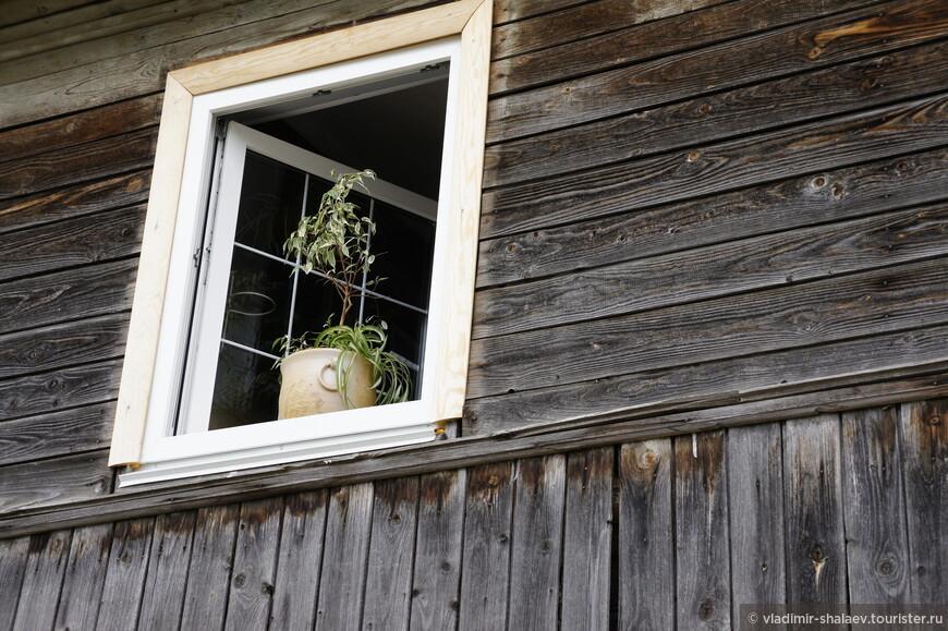 Цветок в окне конспиративной квартиры.