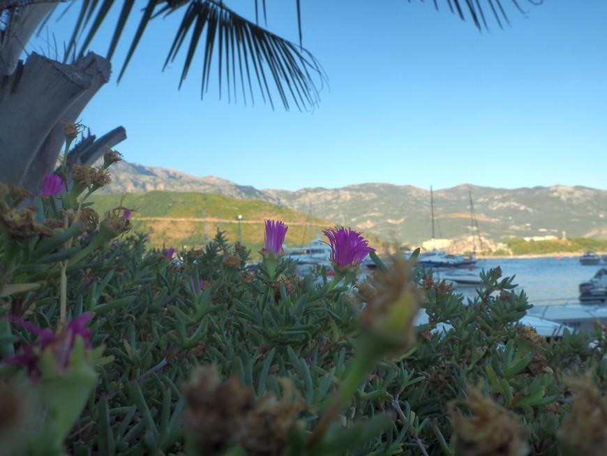 Море, цветы, пальмы, яхты -самые типичные объекты для съемки на набережной