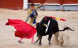 В Мадриде протестуют против боев быков