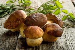 Фестиваль белых грибов пройдёт Италии