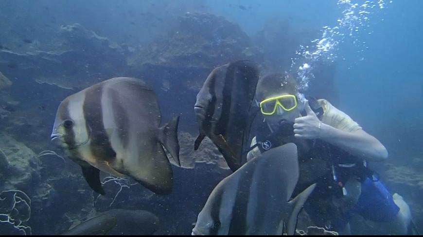 Рыба-ласточка. Коралловый сад у Северной скалы. Когда Сергей был новичком :)