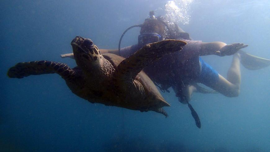 Черепаха бисса у острова Ко-Рин.
