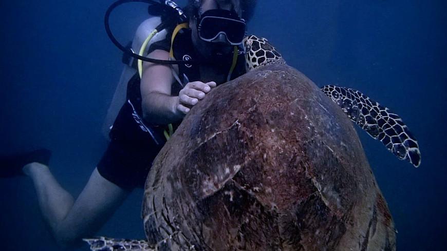 Черепаха биса несъедобна и  людей не боится.